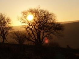 sunset, landscape, photo, photography, tree, autumn, golden light, beauty, nature, bare tree