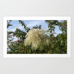 Plant, white flowers, fuchsia, plant, wildlife, photo, photography