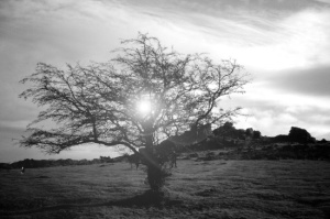 desolate-tree-h0e-prints