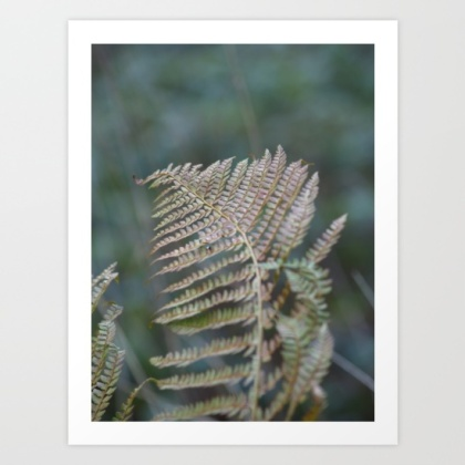 fern, plant, wildlife, photo, photography,