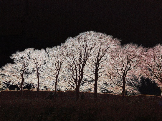 Trees, oriental art, pink trees, photo manipulation, graphic design, oriental trees,
