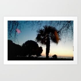 sunset, palm tree, seaside, nature, landscape, photo, photography, beauty
