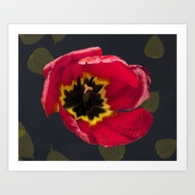 tulips, graphic design, art, flower,