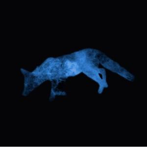 cosmic-fox-prints