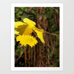 bee-on-a-daffodil-prints